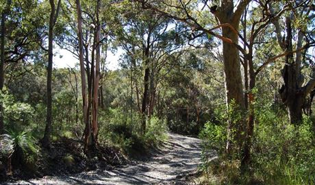 Yondeo trail path, Wallarah National Park. Photo: Susan Davis.