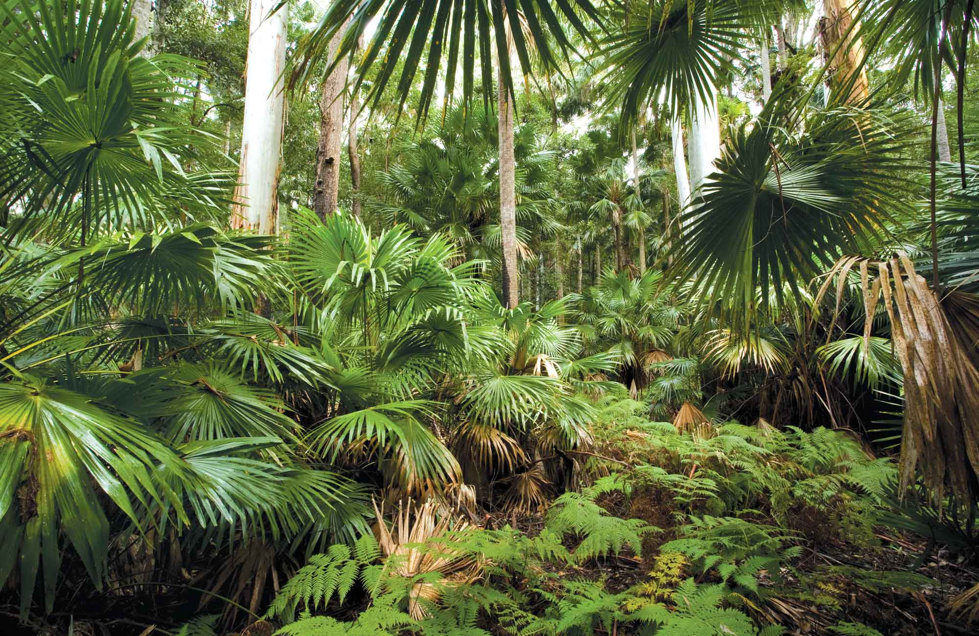 Sugar Palms, Wallingat National Park. Photo: NSW Government