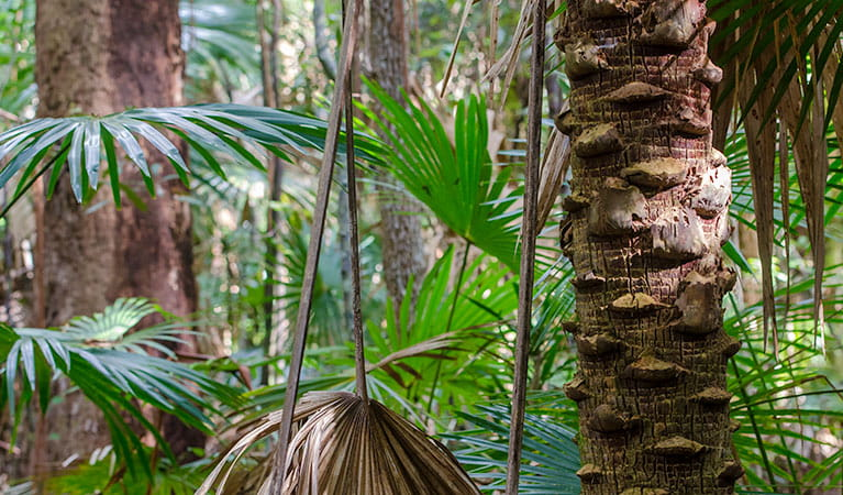 Cabbage Palm loop walking track, Wallingat National Park. Photo: John Spencer