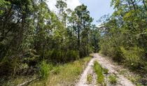 Double Wharf trail, Wallingat National Park. Photo: John Spencer