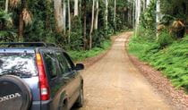 Wallingat Forest drive, Wallingat National Park. Photo: Ian Charles/NSW Government