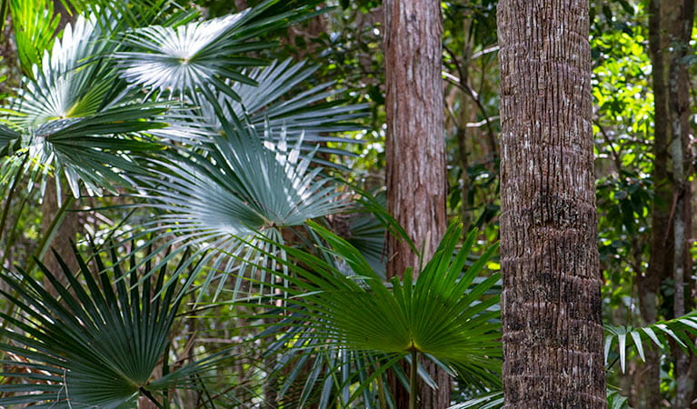 Sugar Creek picnic area, Wallingat National Park. Photo: Ian Charles