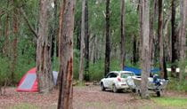 Wallingat campground, Wallingat National Park. Photo: Ian Charles/NSW Government