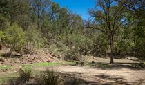 Grassy clearing surrounded by trees with a picnic table and wood barbecue at Gum Hole campground and picnic area in Warrabah National Park. Photo: Peter Berney © DPIE