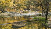 Namoi River, Warrabah National Park. Photo: David Young