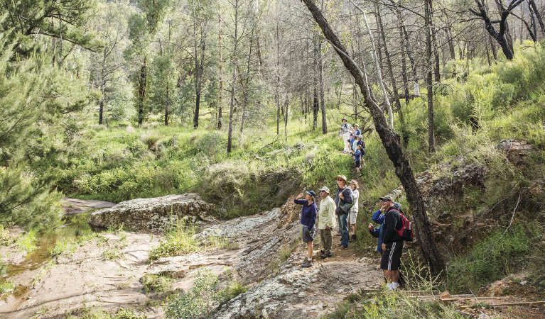 A group of people birdwatching on a guided tour along Burbie Canyon walking track in Warrumbungle National Park. Photo: Simone Cottrell/RBG