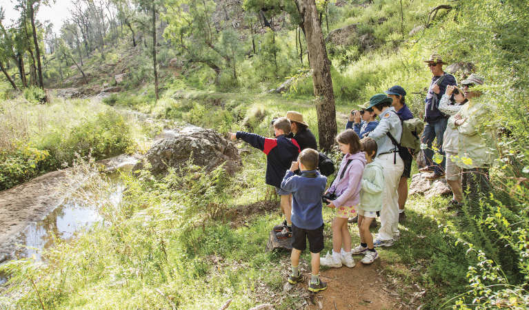 Kids birdwatching on a guided tour along Burbie Canyon walking track in Warrumbungle National Park. Photo: Simone Cottrell/RBG