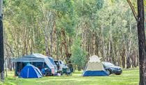 Tents at Camp Blackman in Warrumbungle National Park. Photo: Simone Cottrell/RBG