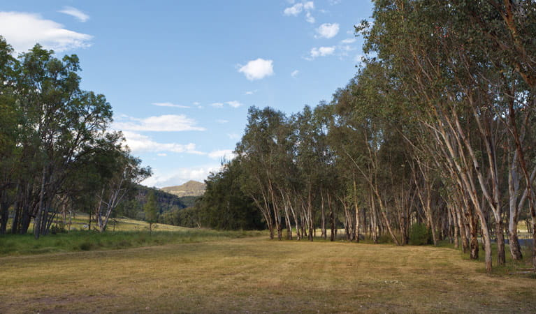 Camp Waalay, Warrumbungle National Park. Photo: Rob Cleary