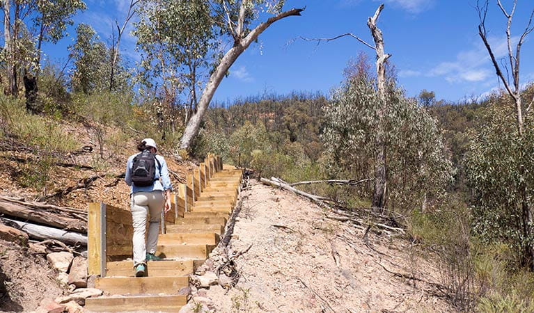 A woman climbs wooden steps on Fans Horizon walking track in Warrumbungle National Park. Photo: Leah Pippos/OEH.