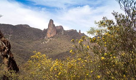 View past flowering shrubs to volcanic ridges and peaks in Warrumbungle National Park. Photo: Leah Pippos © DPIE