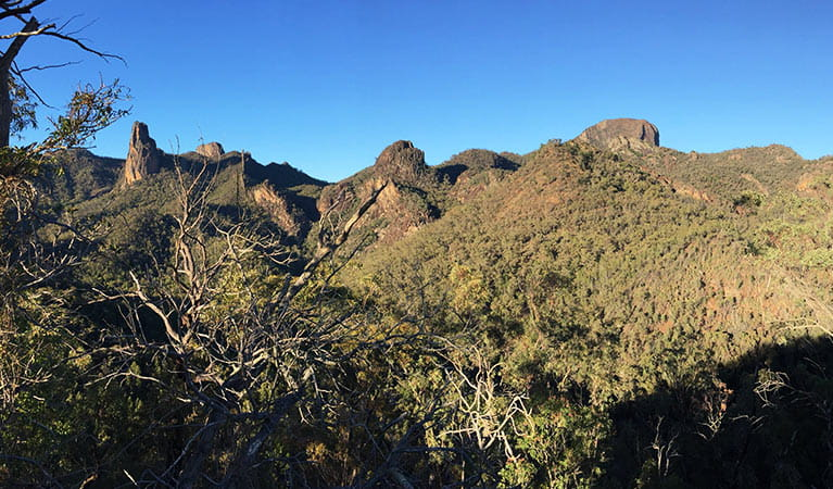 View past trees and scrub to peaks, domes and spires in Warrumbungle National Park. Photo: May Fleming © May Fleming