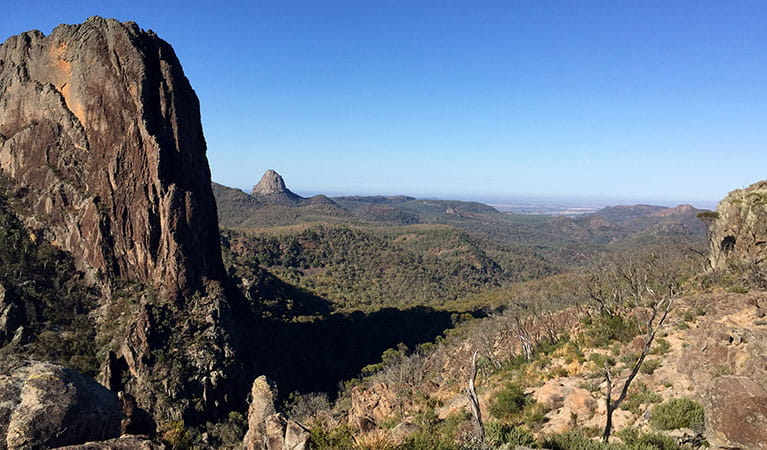 View of massive cliff face, ridges, and mountains clad in forest in Warrumbungle National Park. Photo: May Fleming © DPIE