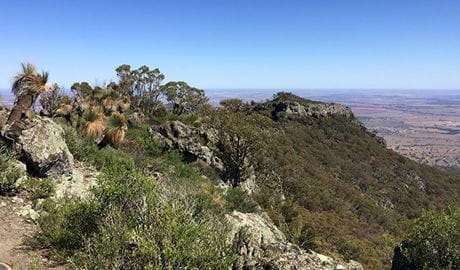 View of grass trees, rocky summit and distant plains. Photo: May Fleming © May Fleming