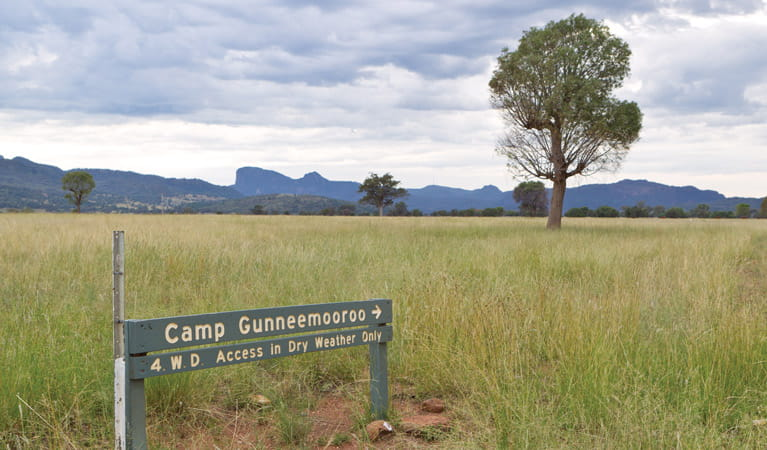 Gunneemooroo campground, Warrumbungle National Park. Photo: Rob Cleary/DPIE