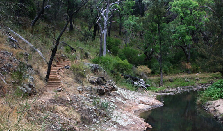Wambelong nature track and waterway, Warrumbungle National Park. Photo: OEH