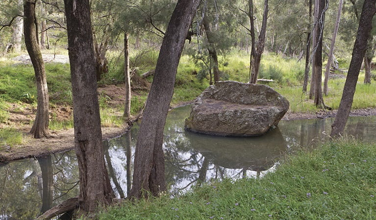 Creek views along Wambelong Nature track, Warrumbungle National Park. Photo: Rob Cleary/Seen Australia
