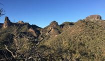 View of volcanic landscape cloaked in woodland in Warrumbungle National Park. Photo: May Fleming © DPIE