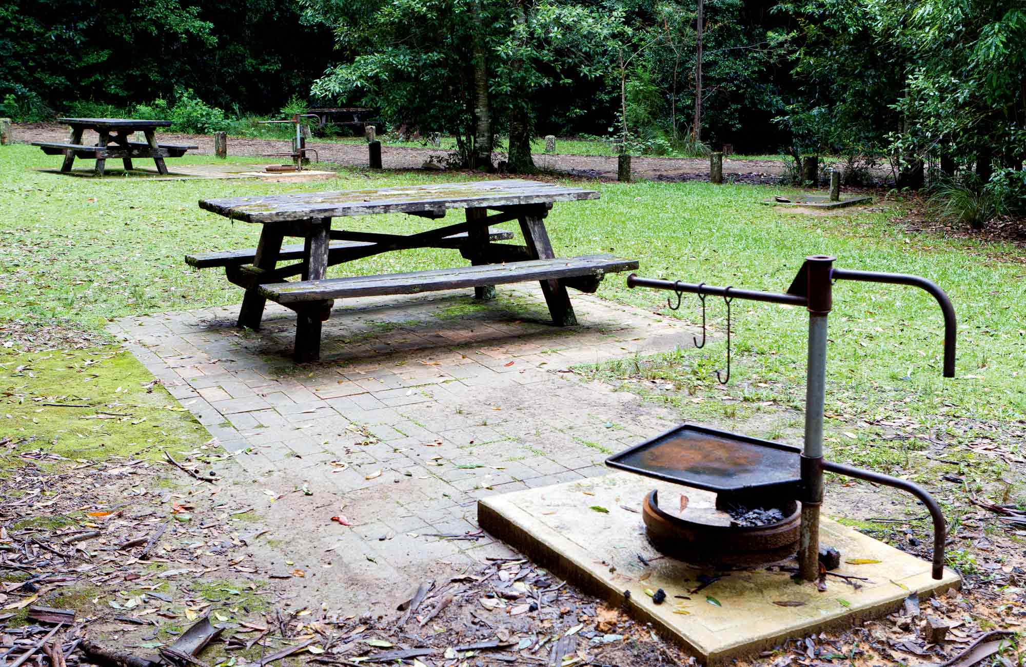 Bellbird Camping Area, Washpool National Park. Photo: Rob Cleary