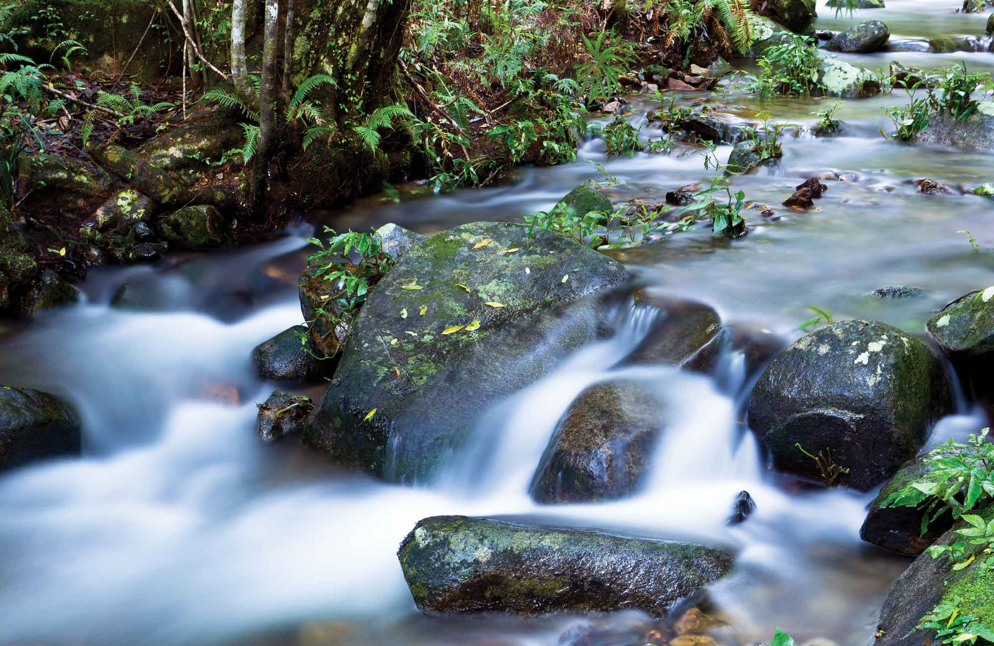 Coombadjha Creek, Washpool National Park. Photo: Rob Cleary