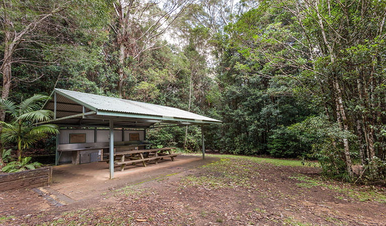 Bellbird campground with picnic shelter in Washpool National Park. Photo: Robert Cleary © DPIE