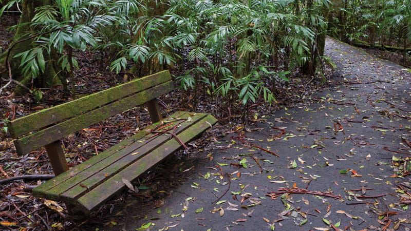 Park bench along the Coombadjha nature stroll. Photo: Rob Cleary