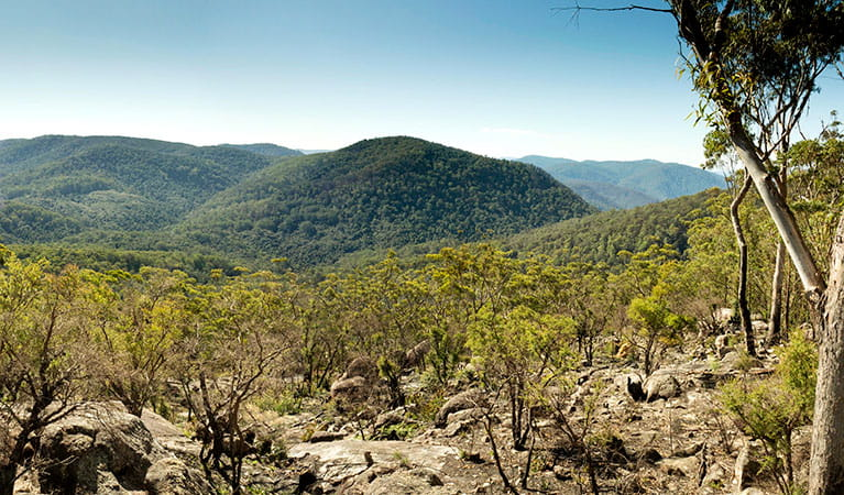The view from Granite lookout in Washpool National Park. Photo: Leah Pippos © DPIE