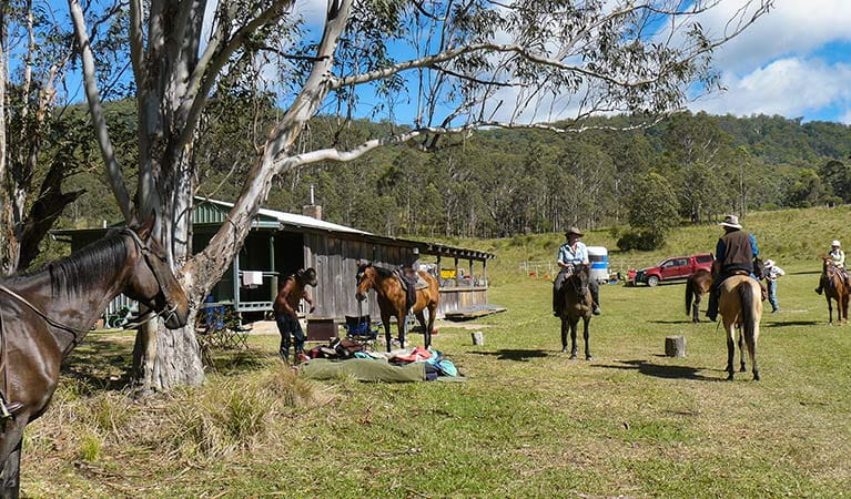 Horse riding trails, Washpool National Park. Photo: Michael Lieberman