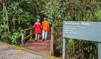 Washpool walking track, Washpool National Park. Photo: Rob Cleary