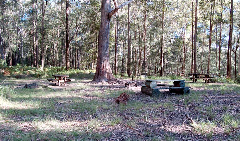 Log tables, Watagans National Park. Photo: Susan Davis