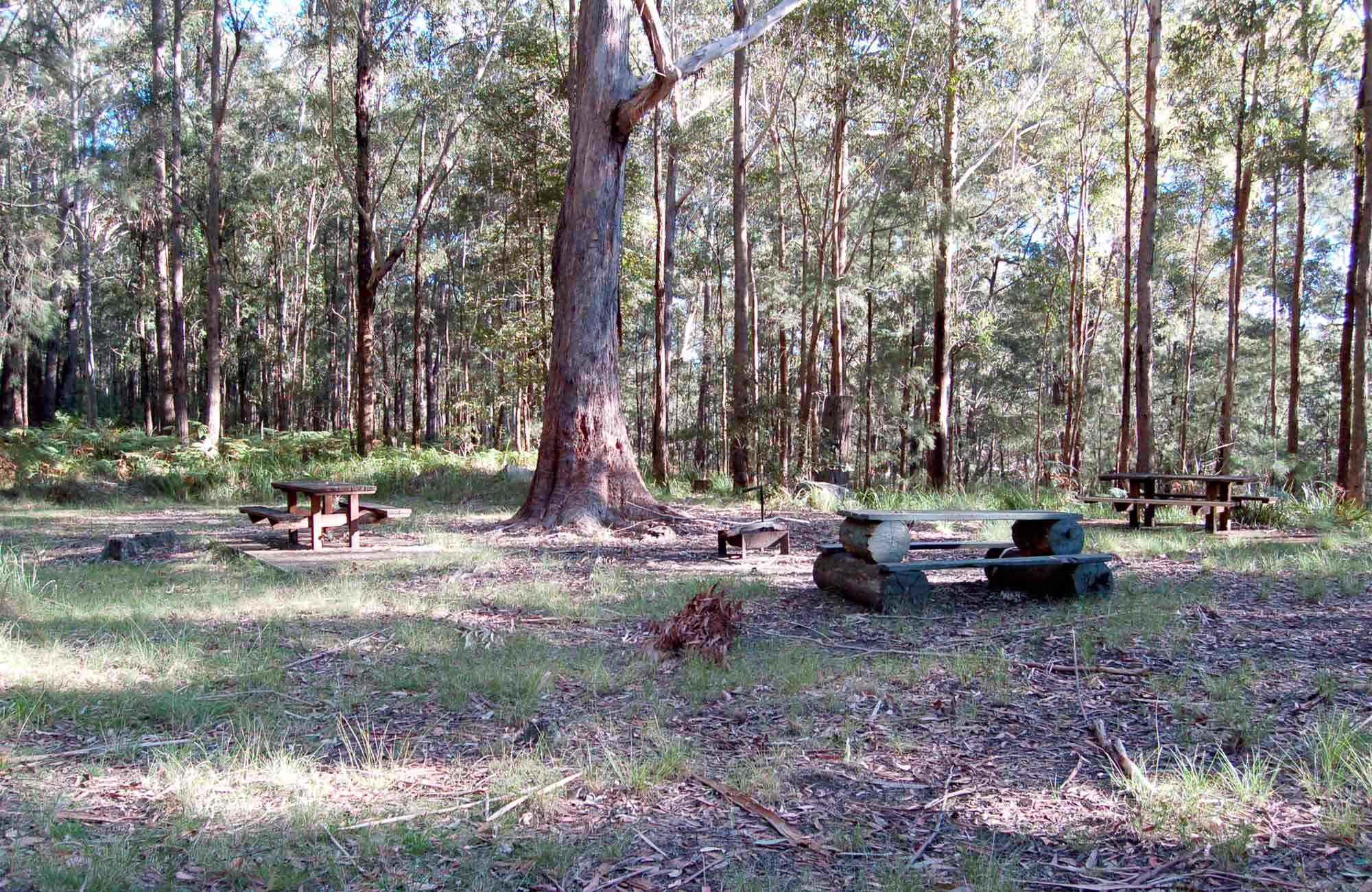 Picnic tables hero, Watagans National Park