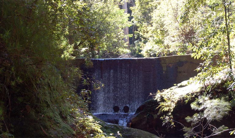 Creek dam, Watagans National Park