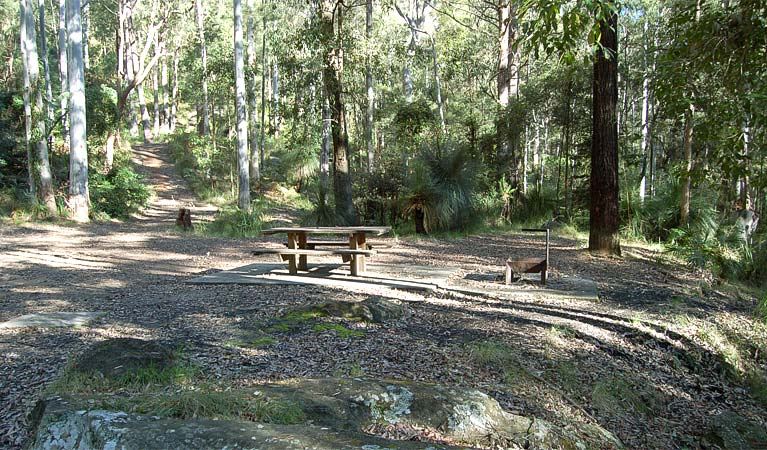 Sun spotted grounds, Watagans National Park. Photo: Susan Davis/DPIE