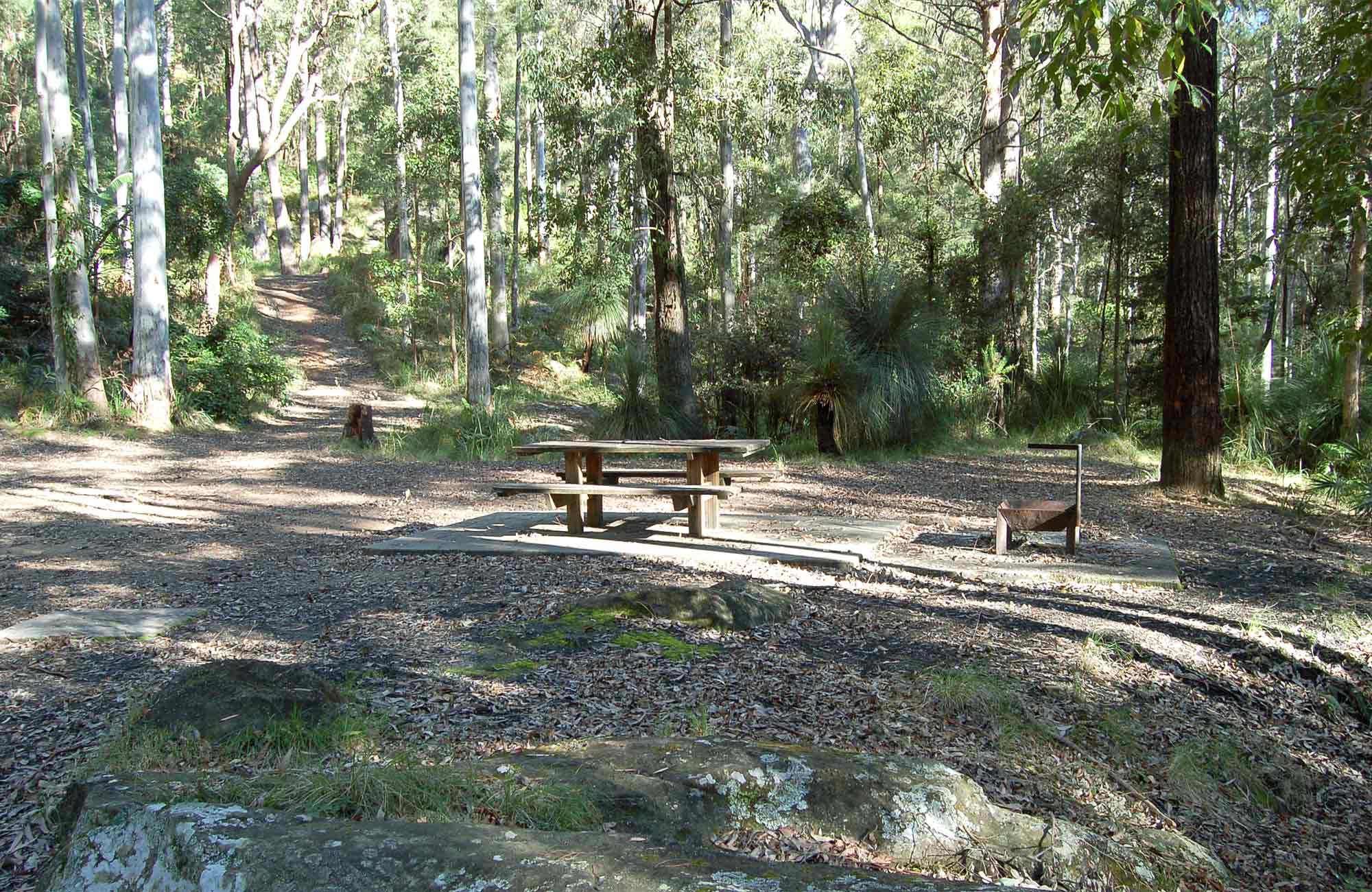 Sun spotted grounds, Watagans National Park