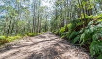 Great North walk, Watagans National Park. Photo: John Spencer