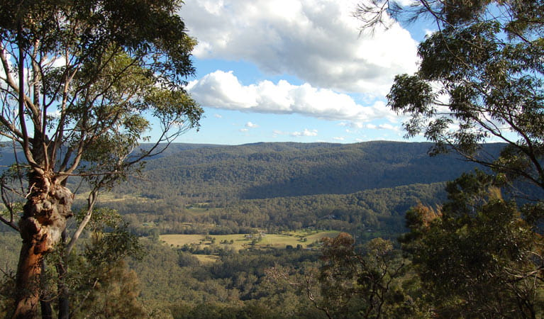 Martinsville Valley, Watagans National Park