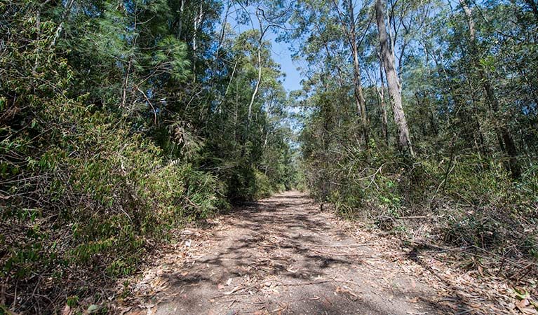 Turners walking track, Watagans National Park. Photo: John Spencer