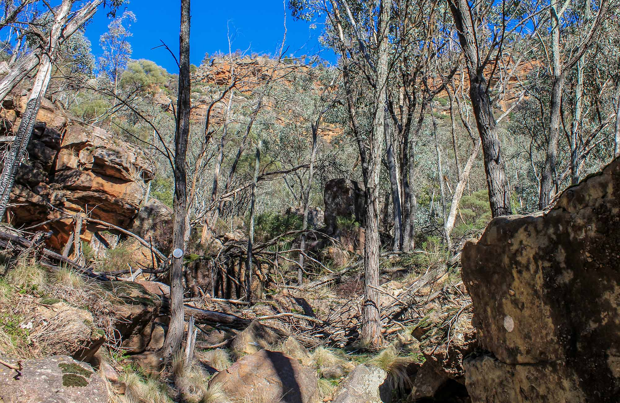 Eualdrie walking track, Weddin Mountains National Park. Photo: C Davis