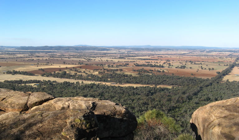 Eualdrie Lookout, Weddin Mountains National Park. Photo: NSW Government