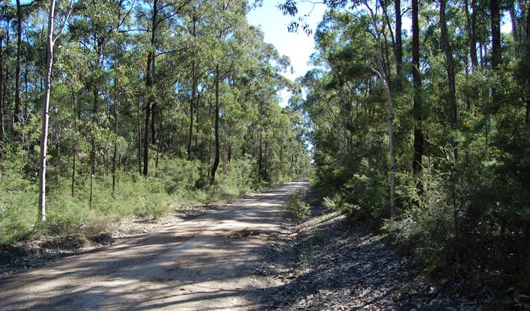 Deadmans Loop Trail, Werakata National Park. Photo: Susan Davis/NSW Government