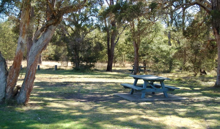 Astills Picnic Area, Werakata National Park. Photo: Susan Davis/NSW Government
