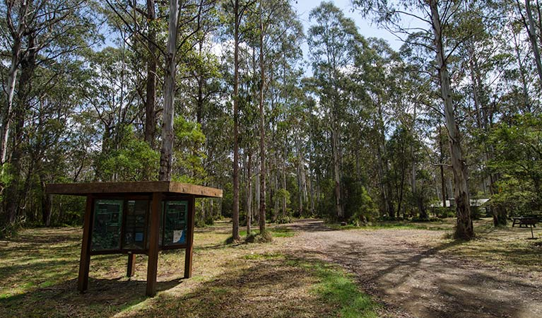 Brushy Mountain campground. Photo: John Spencer/NSW Government