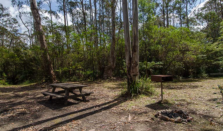Brushy Mountain campground, Werrikimbe National Park. Photo: John Spencer/NSW Government