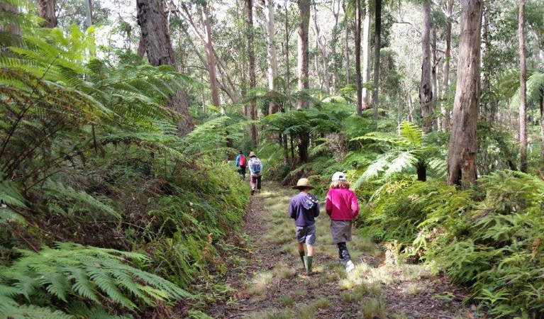 A group of people including 2 children on Carabeen walk, surrounded by ferns and trees. Photo: Timothy Hulland/OEH.