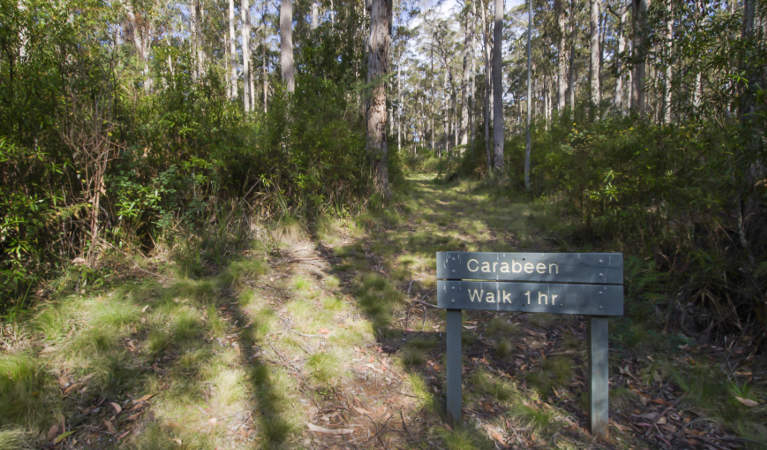 Walking track threading through sun-dappled forest, with Carabeen walk sign in foreground. Photo: John Spencer/OEH.