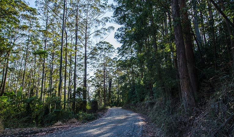 Hastings Forest Way touring route, Werrikimbe National Park. Photo: John Spencer