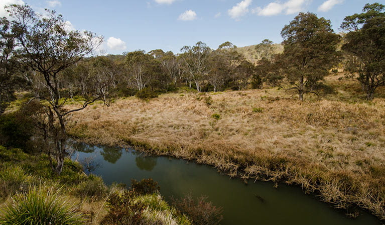Platypus Pools walk, Werrikimbe National Park. Photo: John Spencer