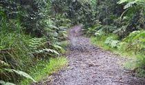 View of Telephone Road passing through dense rainforest. Photo: Liz Dargin/OEH
