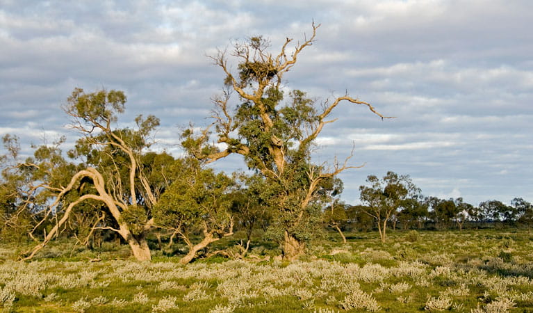 Merton motor trail, Willandra national Park. Photo: