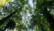 Botanic walk trees, Willi Willi National Park. Photo: John Spencer
